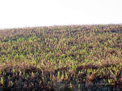 Autumn_2008_0001