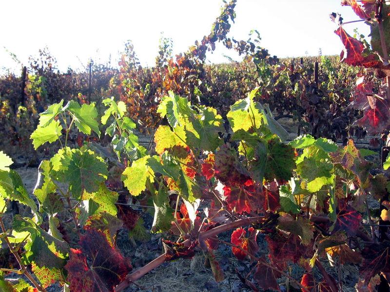 Autumn_2008_0002