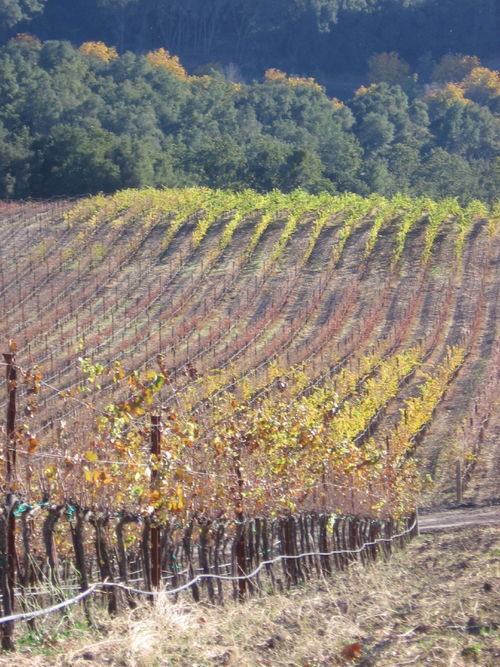 Autumn_2008_vineyard_images_40003