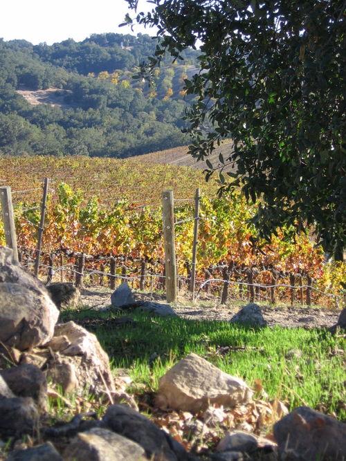 Autumn_2008_vineyard_essay_5_0001