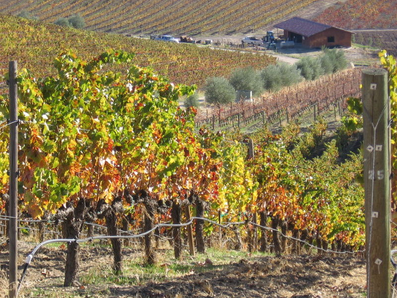 Autumn_2008_vineyard_essay_6_0001