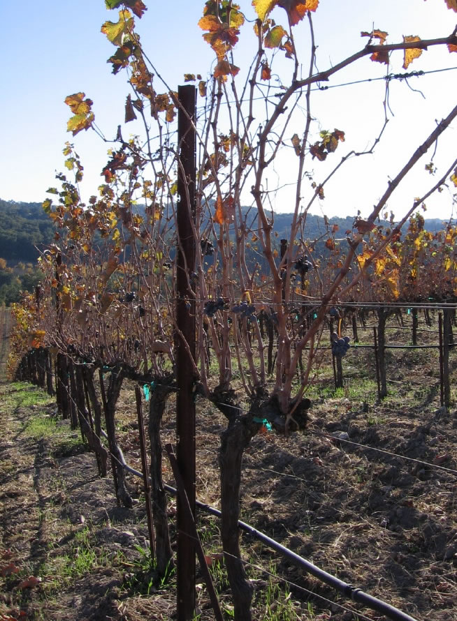 Autumn_2008_vineyard_essay_7_0003