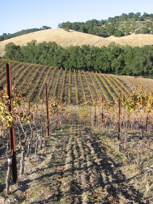 Autumn_2008_vineyard_essay_7_0001