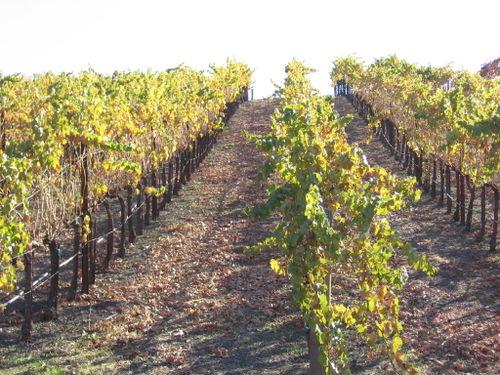 Autumn_2008_vineyard_essay_7_0002