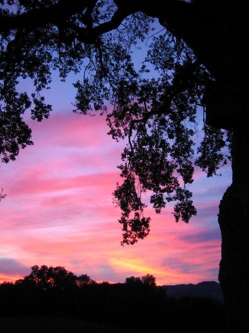 December_Sunsets_0005