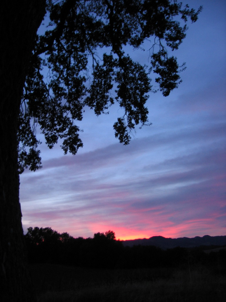 December_Sunsets_0009