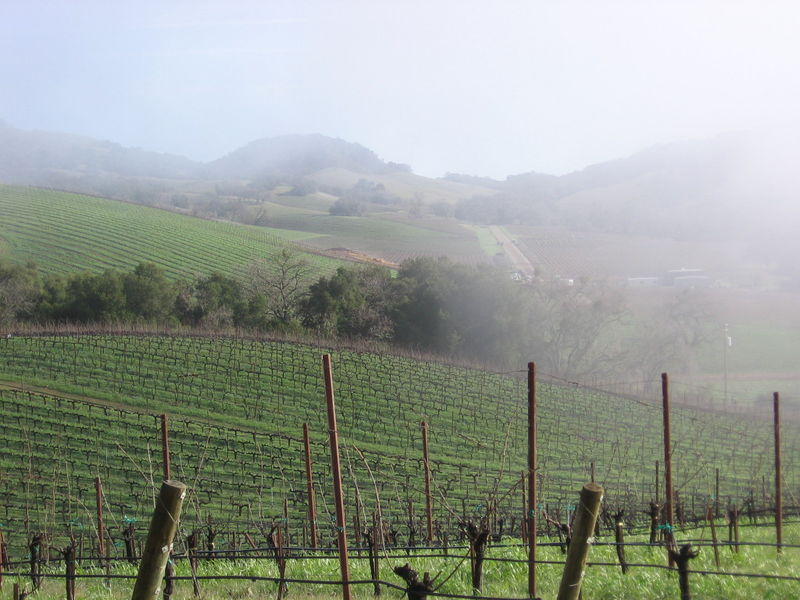 Vineyard_fog_0005