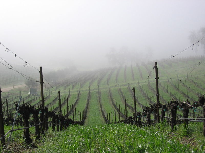 Vineyard_fog_0006