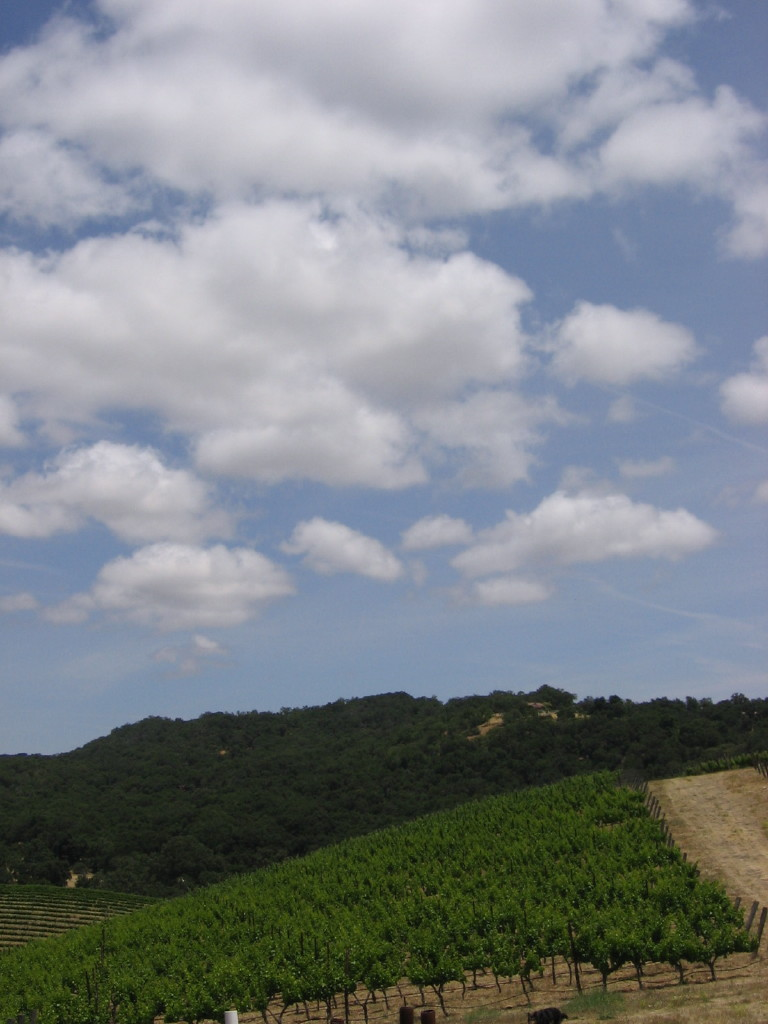 June_vineyard_0004