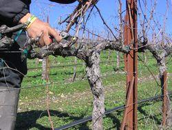 Pruning_2010_0006