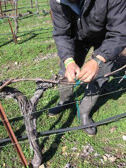 Pruning_2010_0001