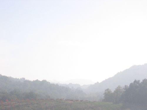 Misty_morning_0006