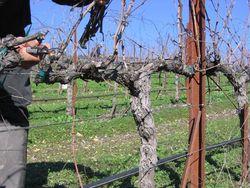 Pruning_2010_0005