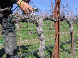 Pruning_2010_0007