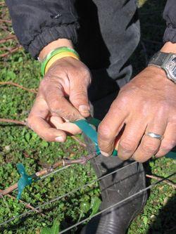 Pruning_2010_0004