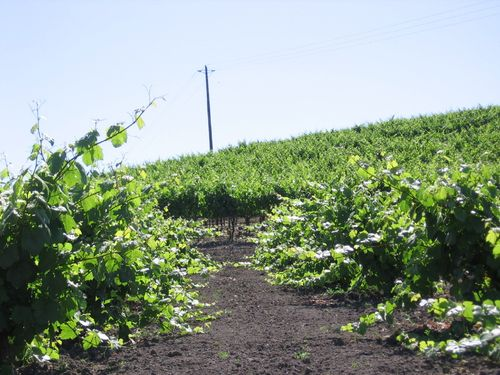 Early_summer_2010_0007