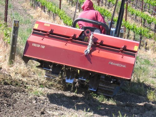 Vineyard_cleanup_0006