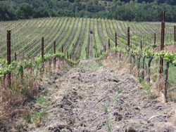 Vineyard_cleanup_0002