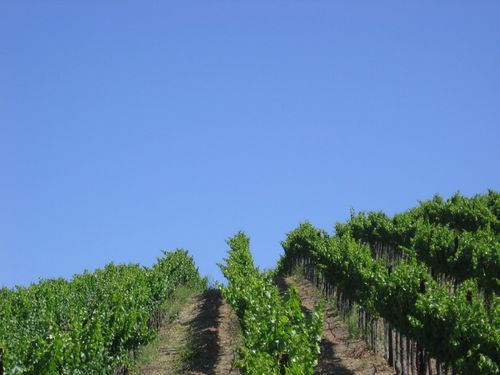 Early_summer_2010_0004