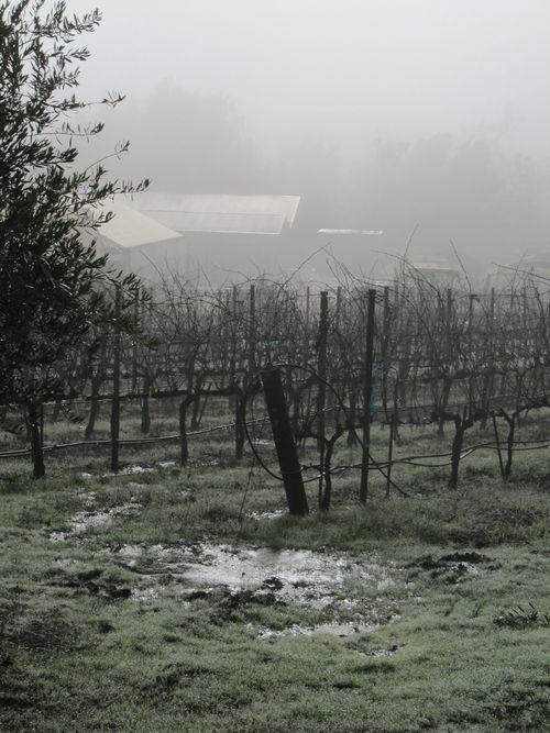 Foggymorning_0009