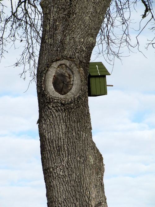 Green_vineyard_2011_owlbox