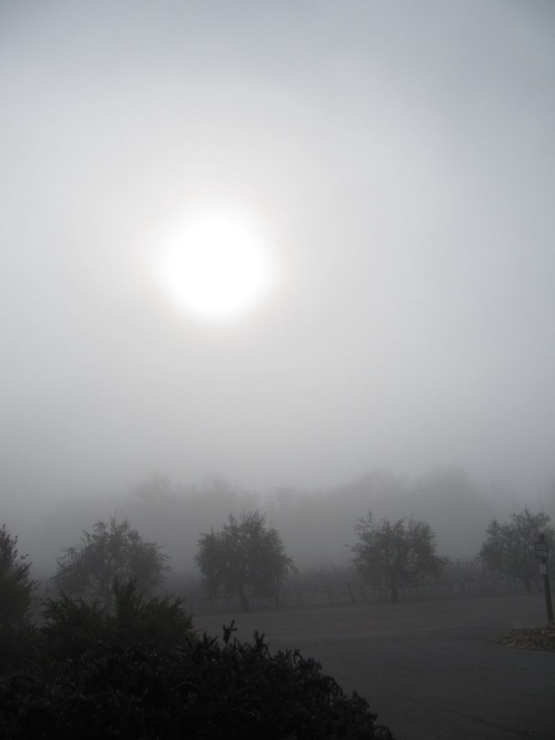 Foggymorning_0002