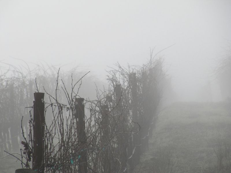 Foggymorning_0003