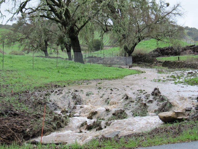 Post-rainstorm_0002
