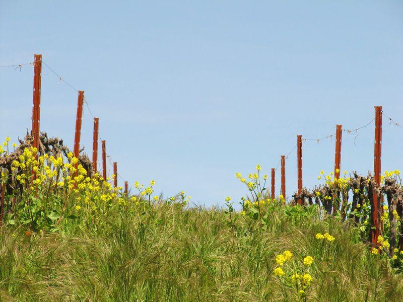 Spring_wildflowers_0003