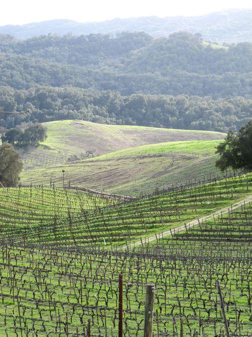 Green_vineyard_2011_longview