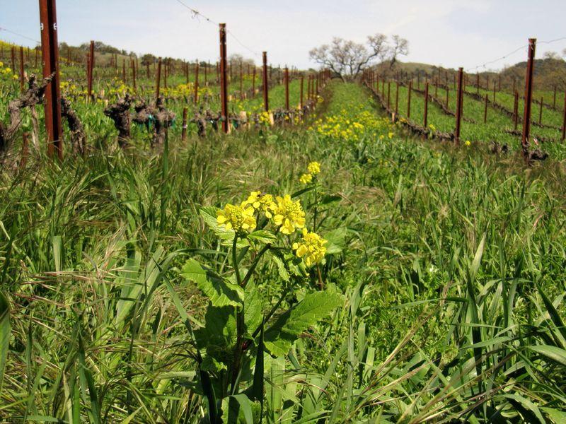 Spring_wildflowers_0007