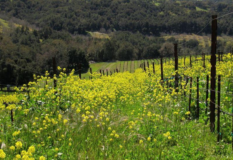 Spring_wildflowers_0008