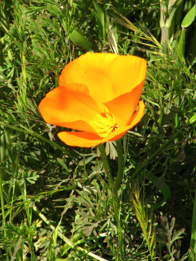 Spring_wildflowers_0004