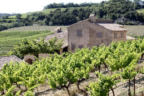 Vinsobres_house_with_vines