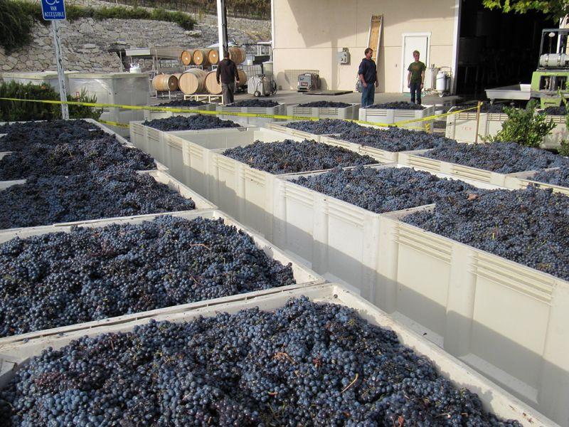 Last_grapes_0001