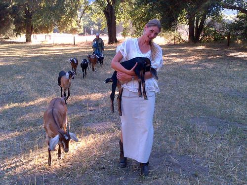 Shandi with goats