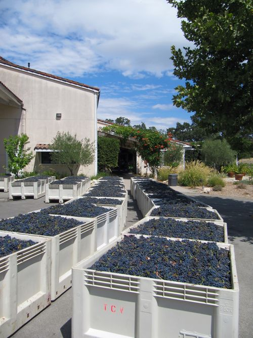 Bins of syrah outside winery sept 6 2012