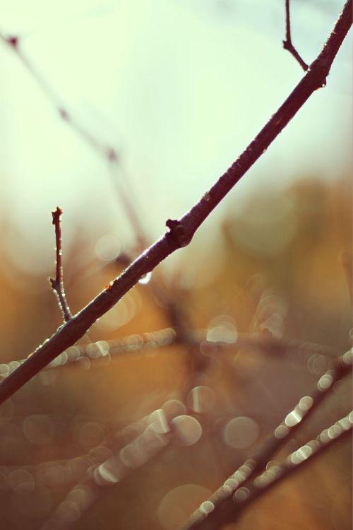 WinterSticks