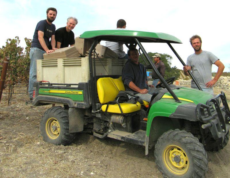 End of 2012 harvest - vineyard