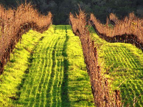 Green cover crop setting sun