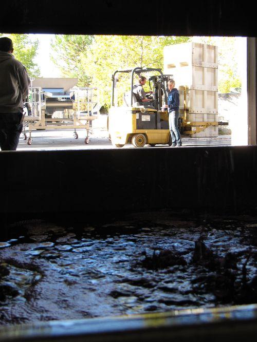 Pressing syrah and processing whites