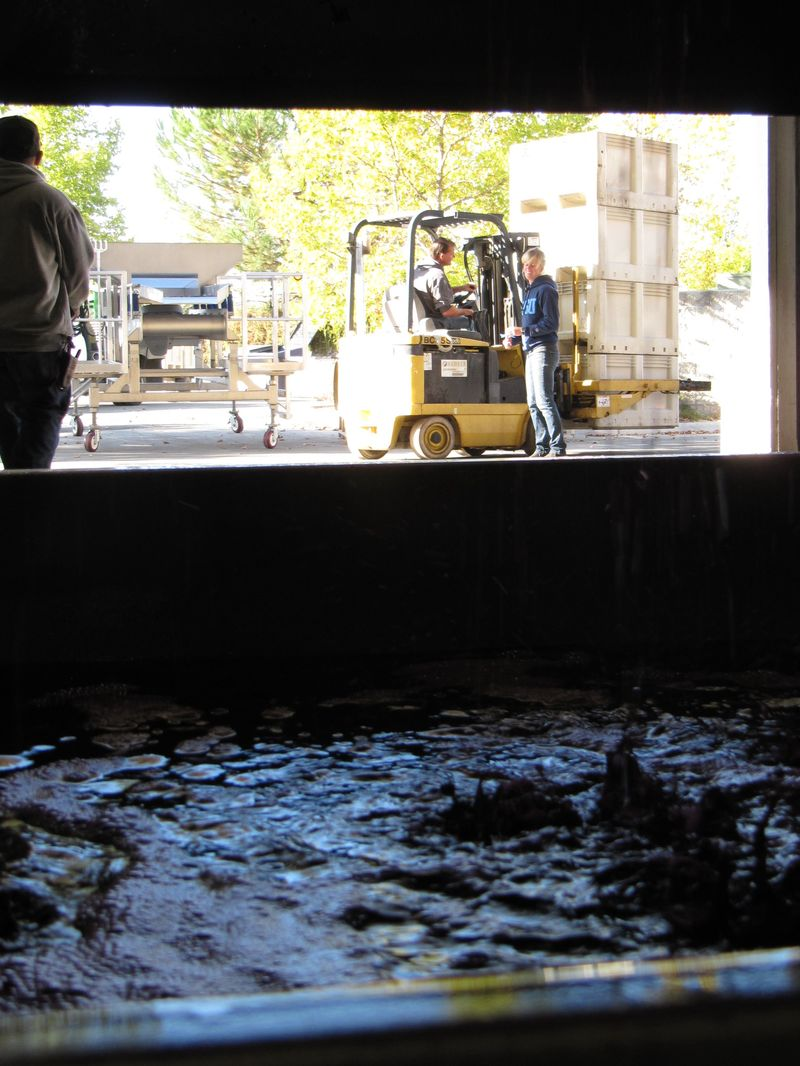 Pressing syrah and processing whites