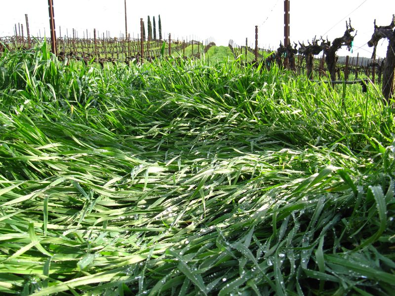 Cover crop march 2013