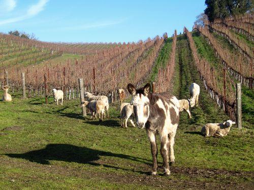 Animal herd