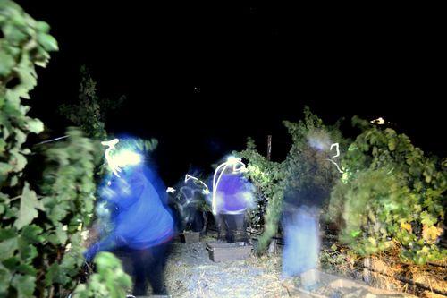 Night Harvest harvesting