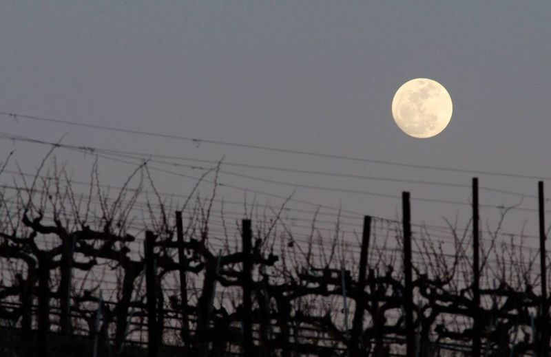 Moon over Mourvedre