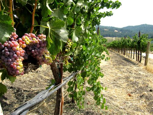 Long View with Grenache