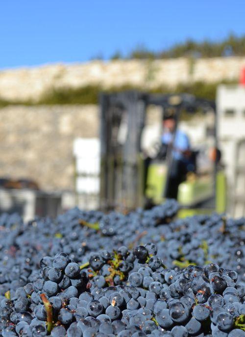Pinot in bins