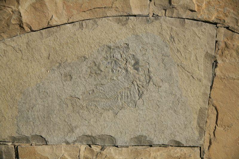 Halter fossil