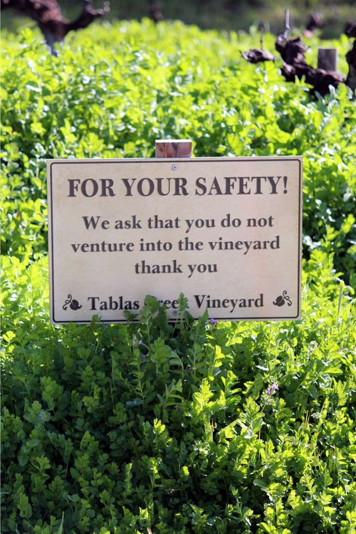 Tablas Creek Vineyard Blog: Photo Essay: Green, Green, Green